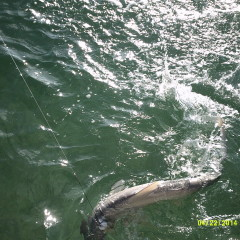 04-16 to 27-2014: Everglades National Park, Fl.